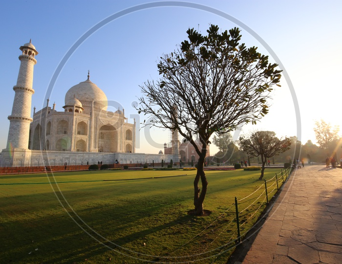 Landscape of Taj Mahal with tree in the foreground