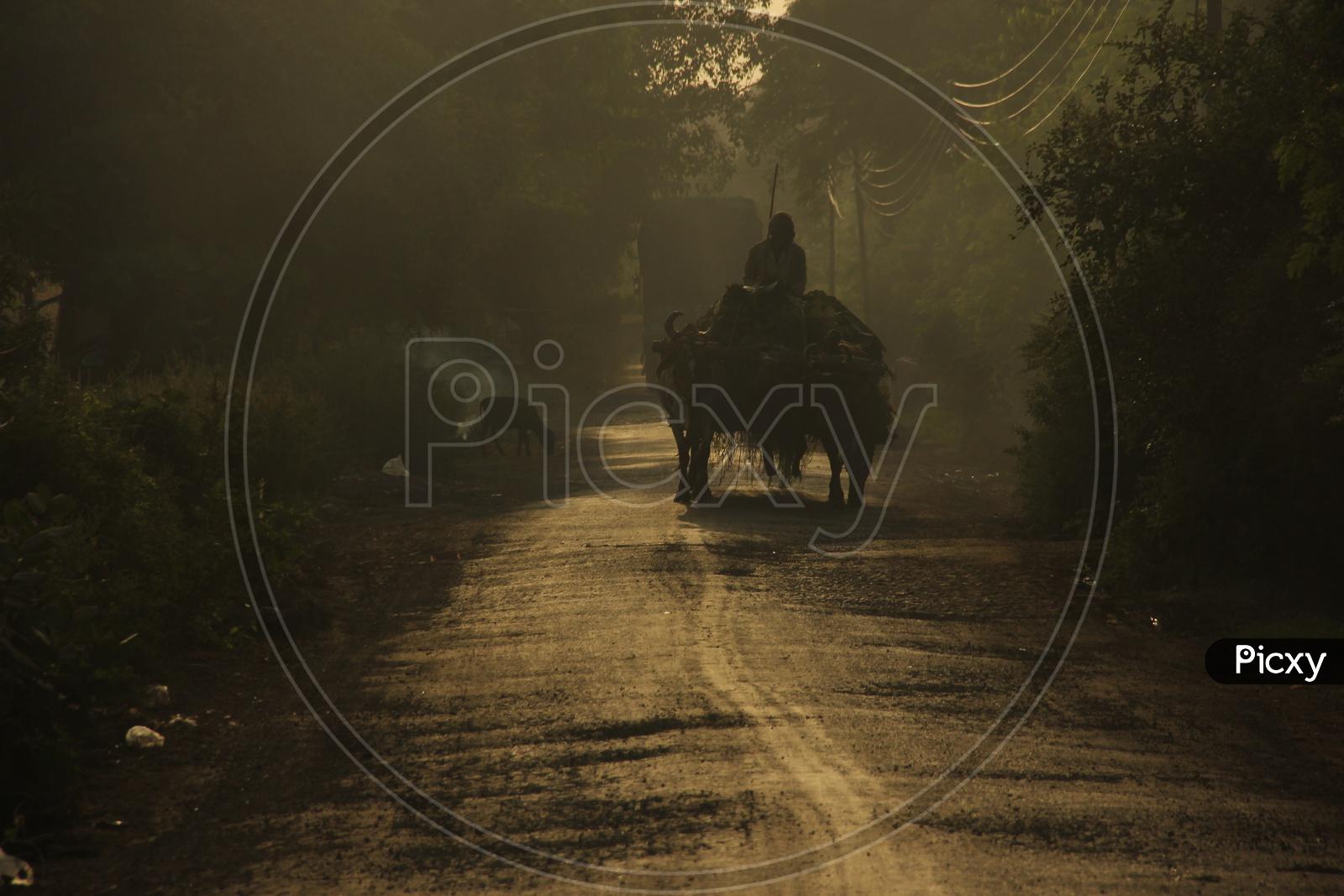 Farmer riding Bullock cart early in the morning