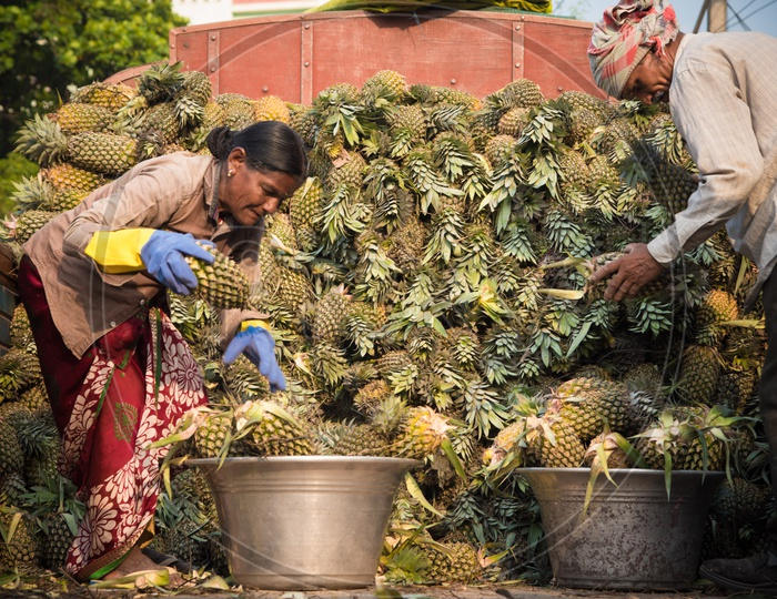 Offloading Pineapples from Truck