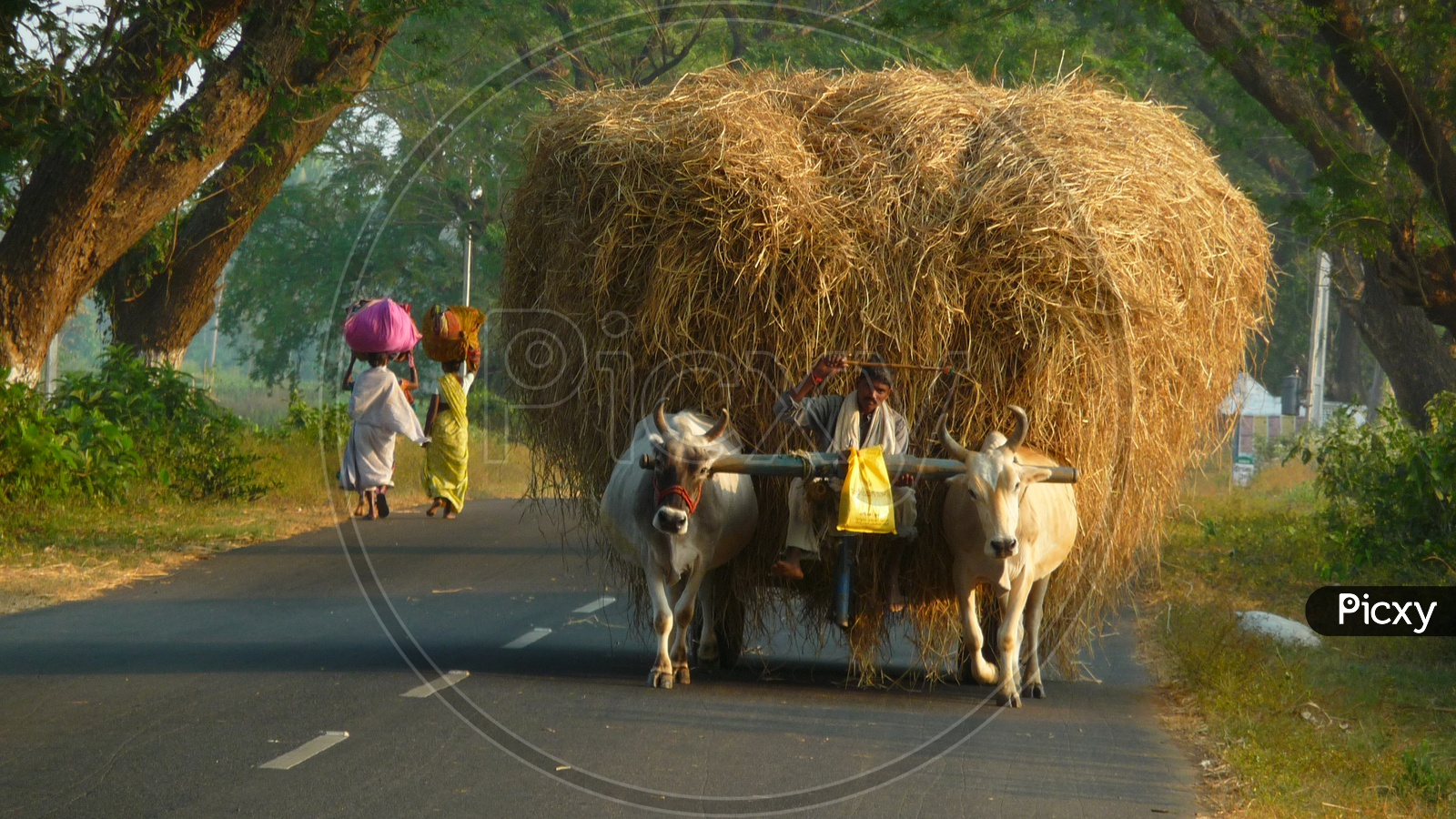 Bullock cart with Grass load