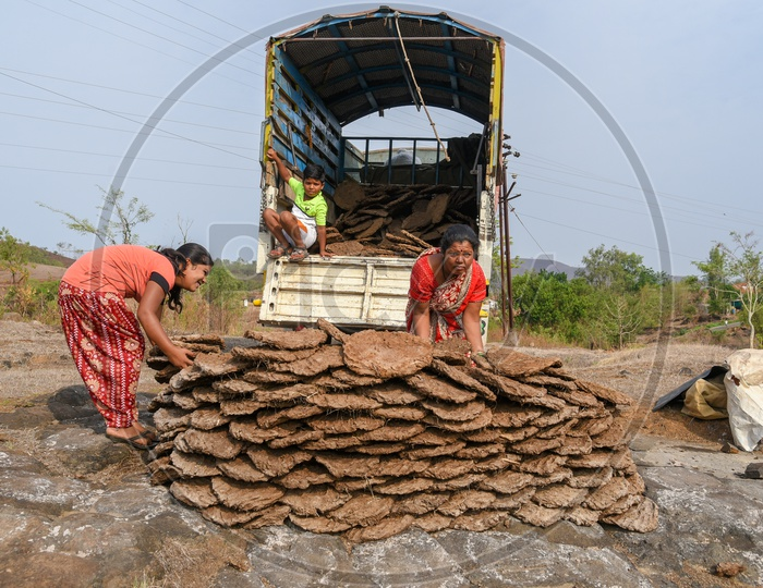 Woman loading dry Dung Cakes into truck.