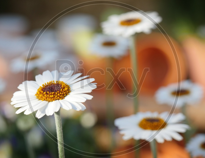 Macro ; vizag ; flowers ; nature ; Visakhapatnam ; attractive