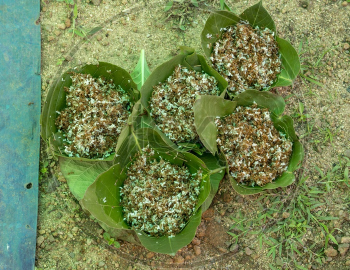 Tribal Food - Mostly Ants