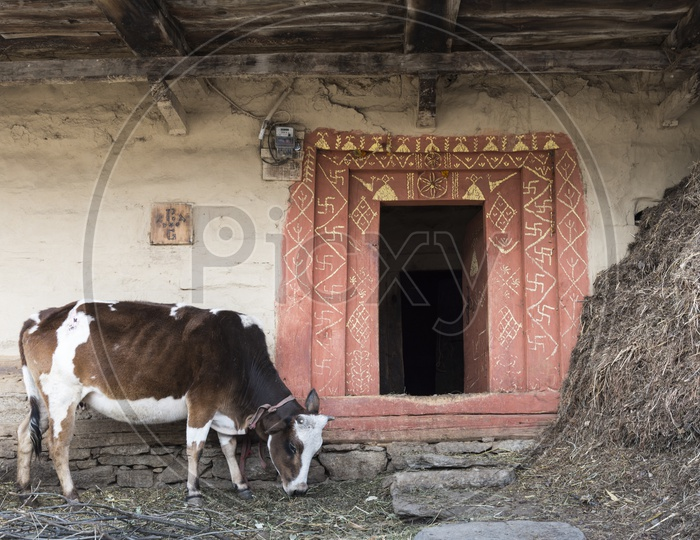 Cow in Manali