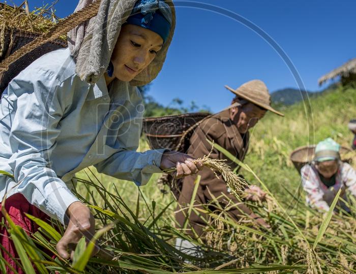 Woman Farmer in Daporijo to Aalo, Bararrupak Village