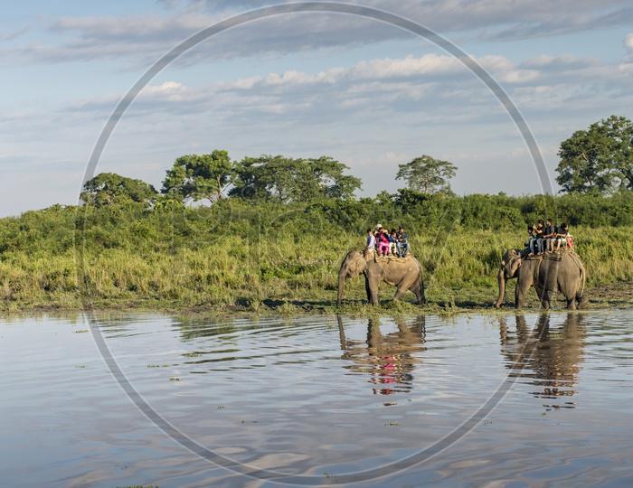 Elephant Ride in Kaziranga National Park.