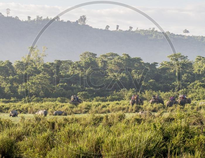 Indian rhinoceros and Elephants at Kaziranga National Park
