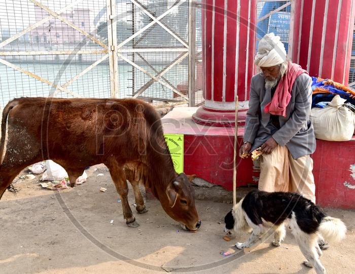 Sadhu Feeding animals