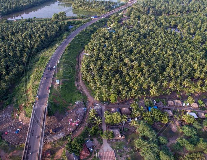 highway in between coconut farms