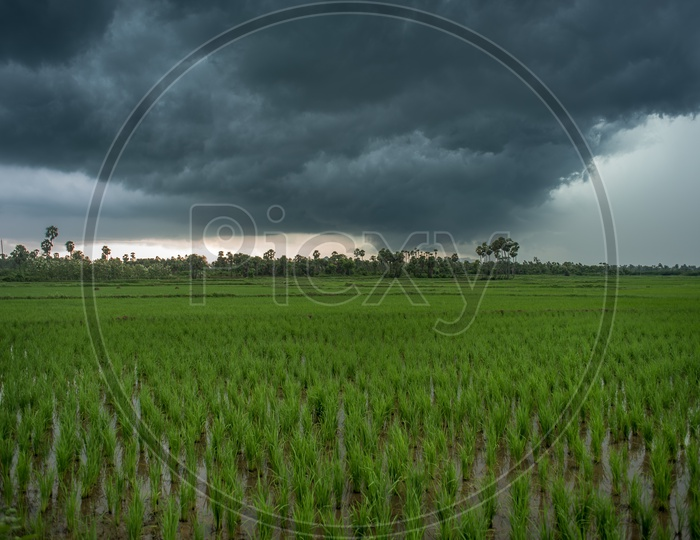 thick clouds around paddy fields