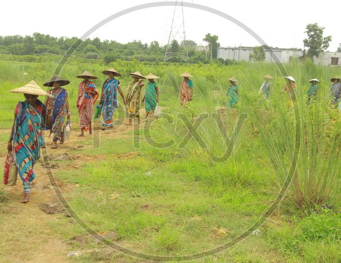 Women wearing Hat walking Fields, Odisha