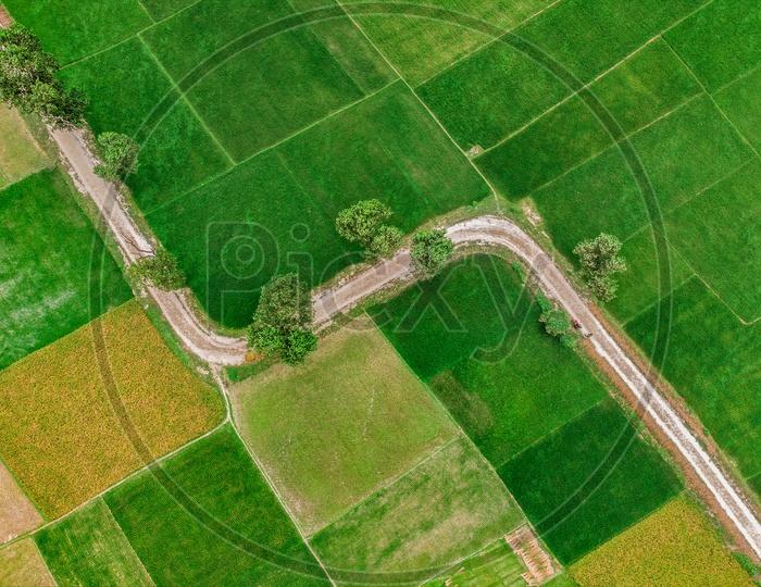 Zigzag Road Through Paddy Field