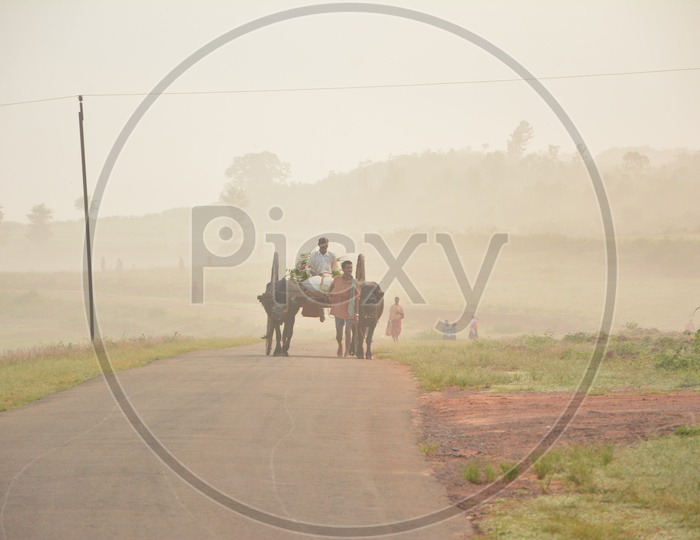 Araku Tribal People Transporting Vegetables on Bullock cart