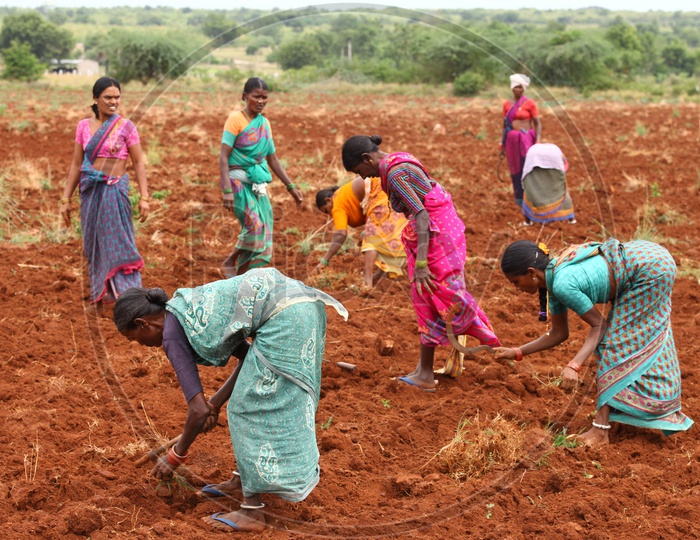 Indian Women Farmers working in Agriculture field