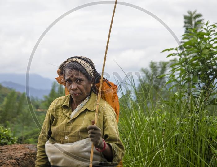 Portrait of Women Farmer in Sri Lanka