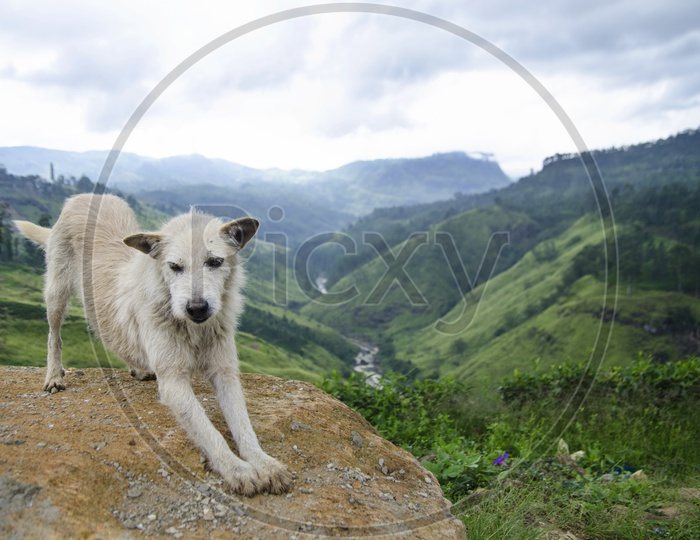 Landscape of beautiful Mountains of Sri Lanka with white dog in the foreground