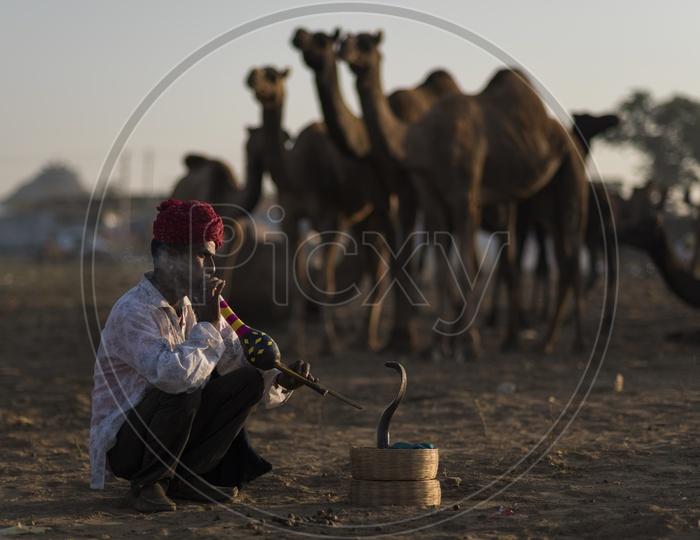 Snake Play in Pushkar Camel Fair