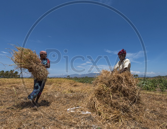 Farmer Couple Working In their Field