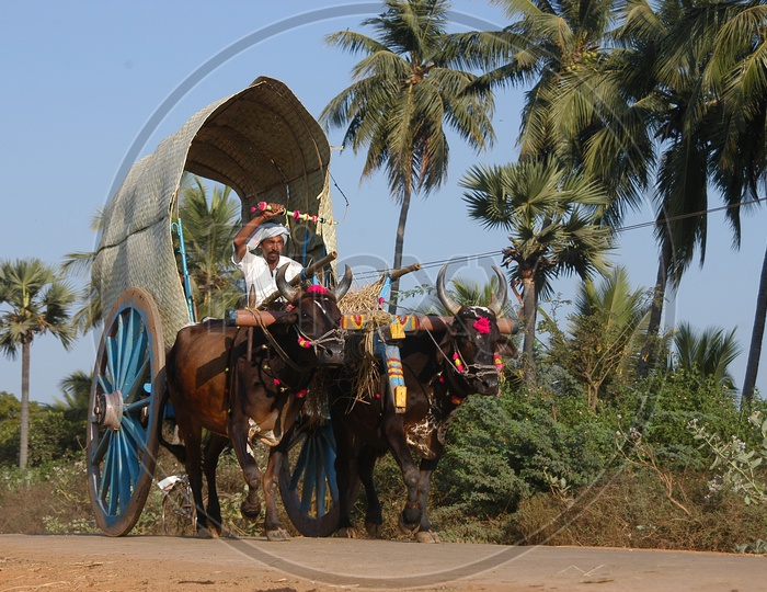Bullock Cart In Rural Village Roads