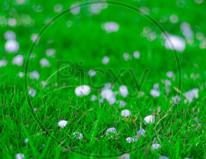 Flakes And Balls Of Ice Crystals On Green Grass After A Hail Storm Appearing Scenic In A Shallow Depth Of Field Landscape Image