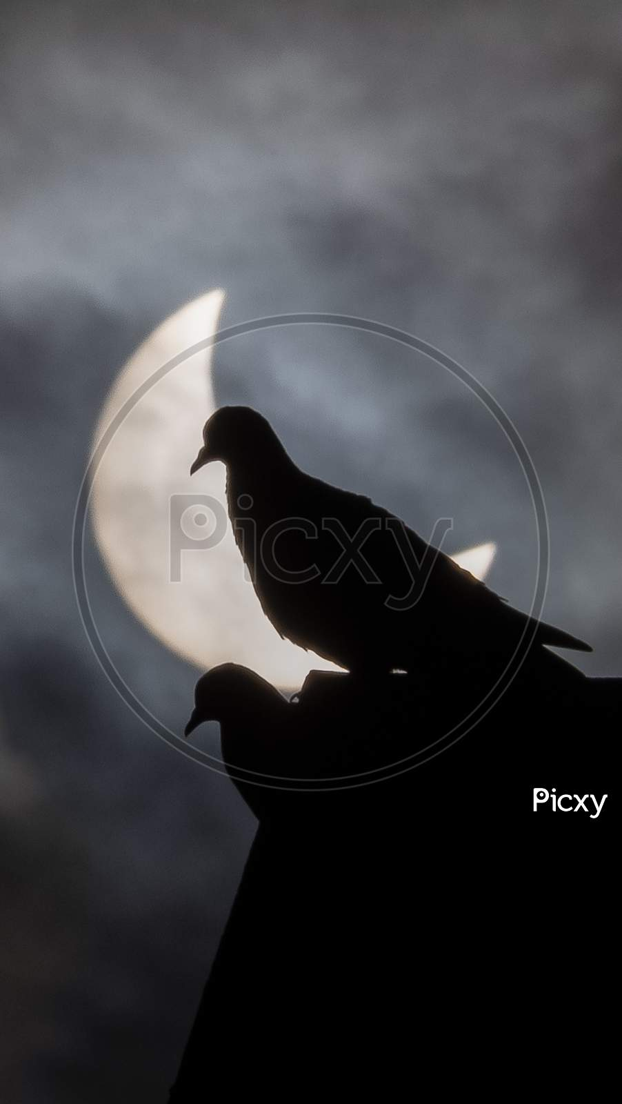 Silhouette Of Pigeons Couple With Solar Eclipse Sun As Background