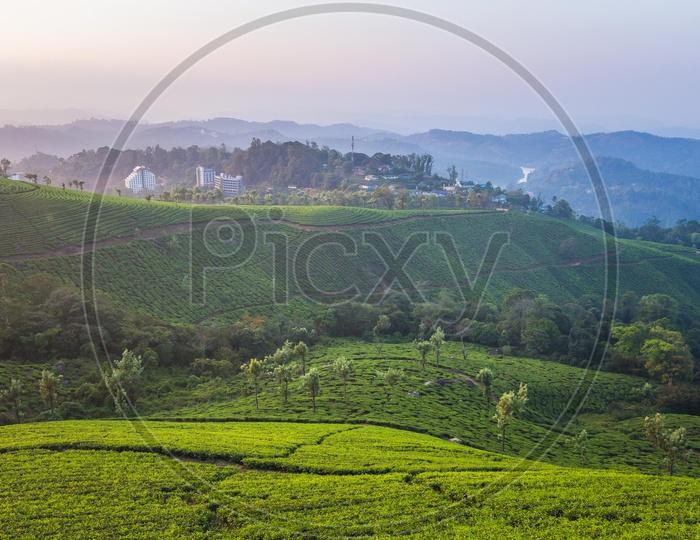 Tea plantations in Ooty