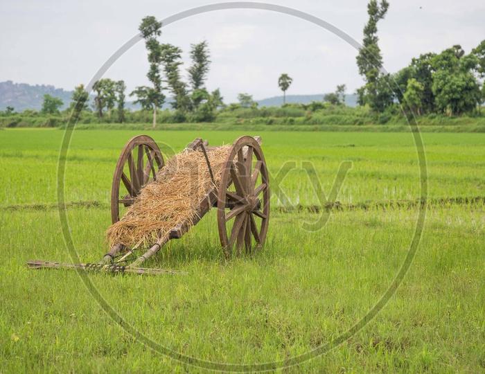 A bullock cart in fields