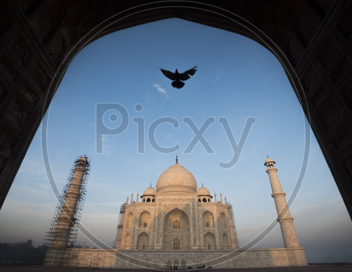 Beautiful Landscape of Taj Mahal with arch and bird in the foreground