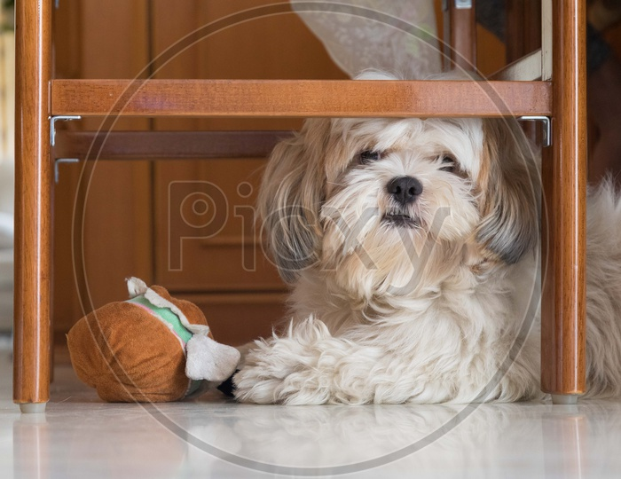 Pet Dog playing with Toys