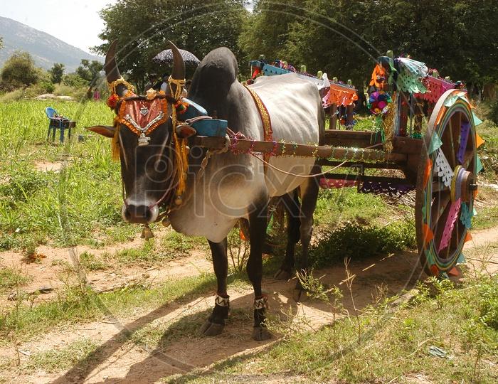 Bullock Cart at Rural Area