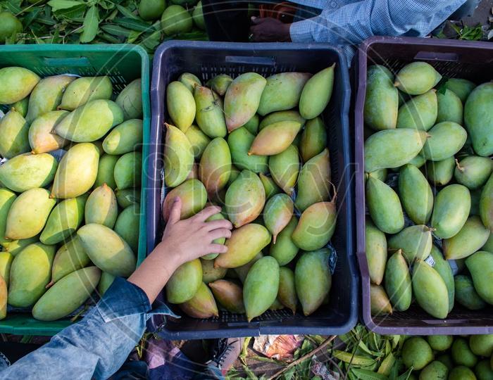 Totapuri or Collector mangoes in baskets at Kothapet Fruit market, Dilsukhnagar, Hyderabad.