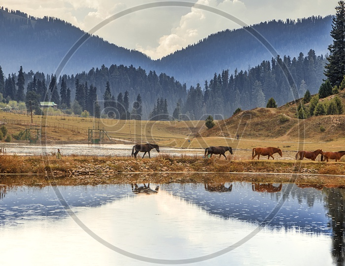 the amazing landscapes at gulmarg