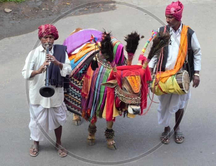 Gangiredddhu or Decorated Bulls  on Indian Streets At Pongal  Festival Season