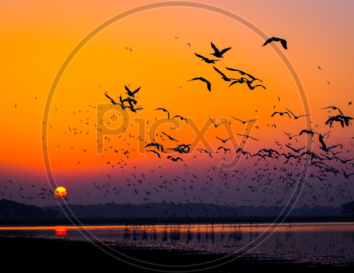 Early morning flamingo and pelican fly together in sunrise_