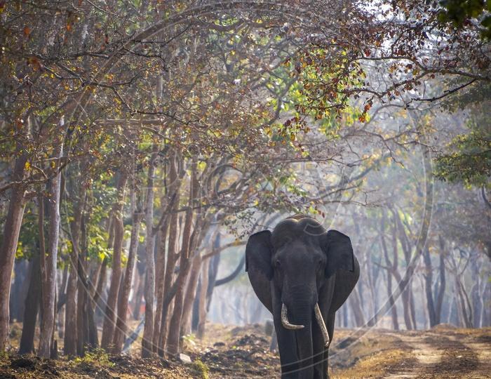 The Tusker Elephant