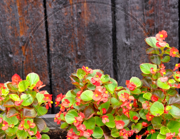 Macro Shot of Colorful Plants at Farglory Hotel Hualien