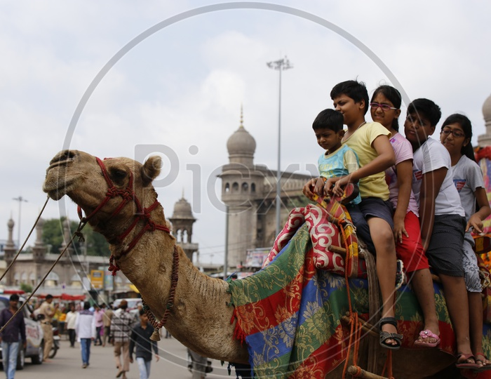Camel Rides On The Streets of Charminar