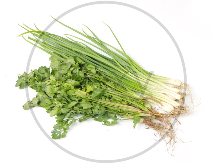 Fresh coriander and onion herb on white background