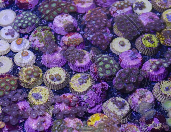 Underwater Fantasy corals in Thailand