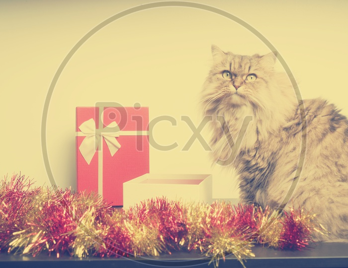 Artistic Background with Christmas Gifts And Persian Cat  Forming Christmas Festival Template