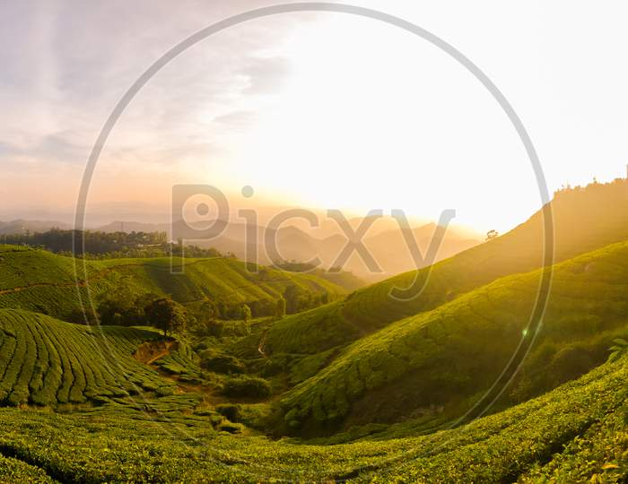 Landscape Of  Terrains With Tea Plantations or Tea Gardens With Sunset Sun In Background