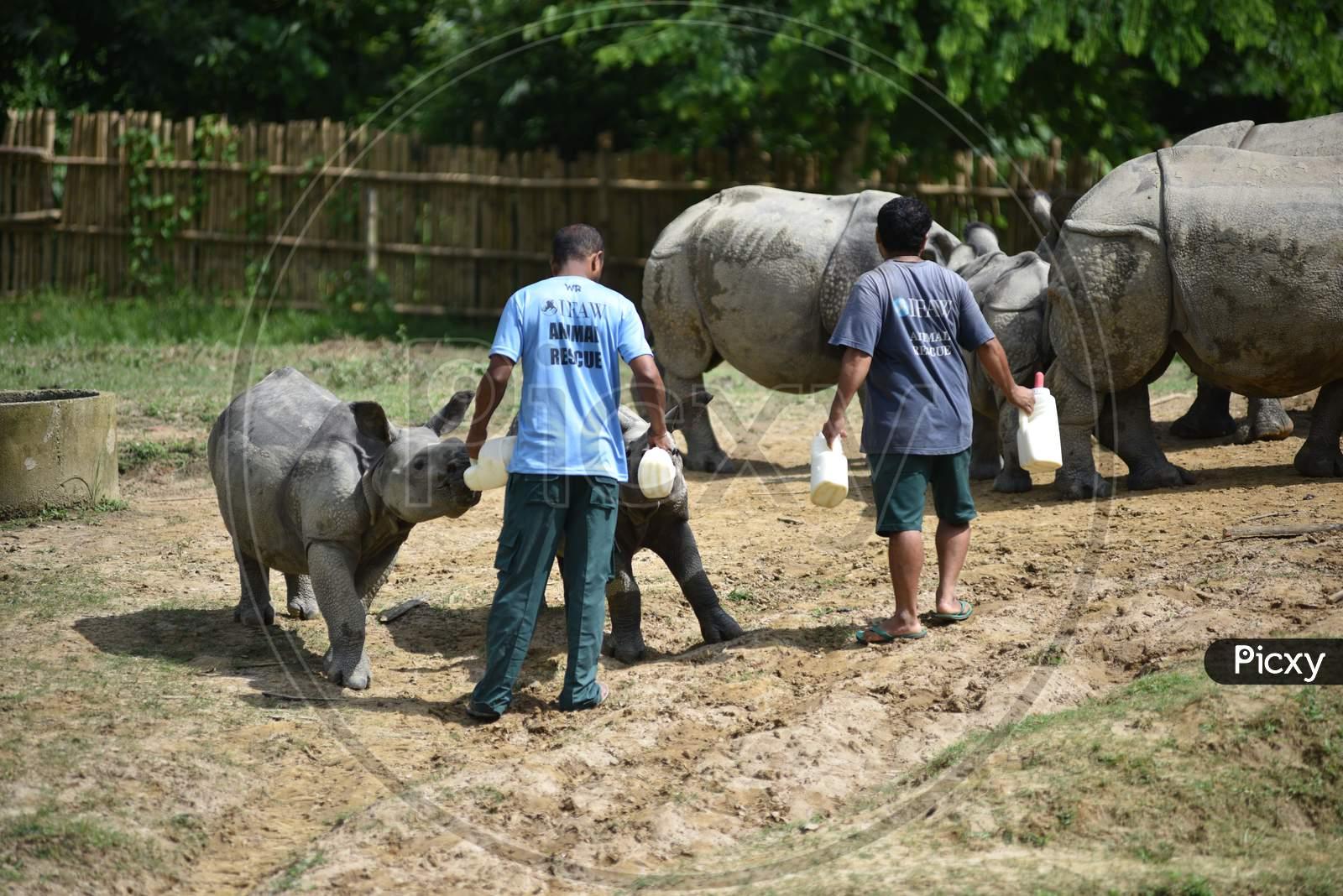 Caretakers Feeding White Rhinoceros Baby in Kaziranga National Park