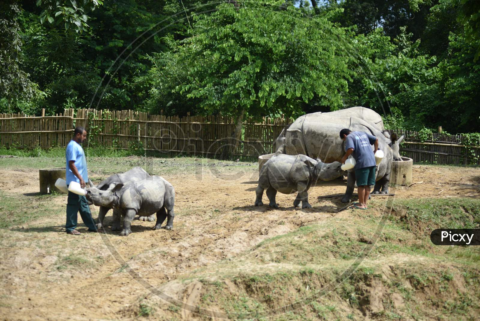 Caretakers Feeding White Rhinoceros Baby in Kaziranga National Park