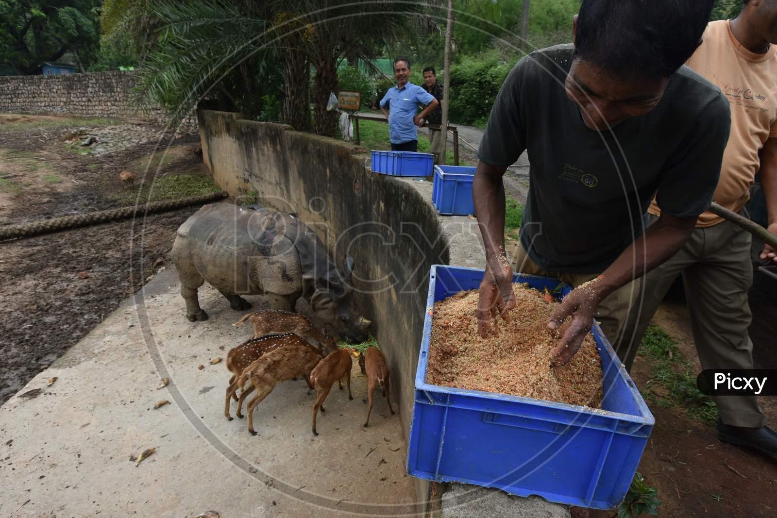 Caretakers Feeding  Horned Wild Deer and Rhinoceros In Kaziranga National Park, Assam