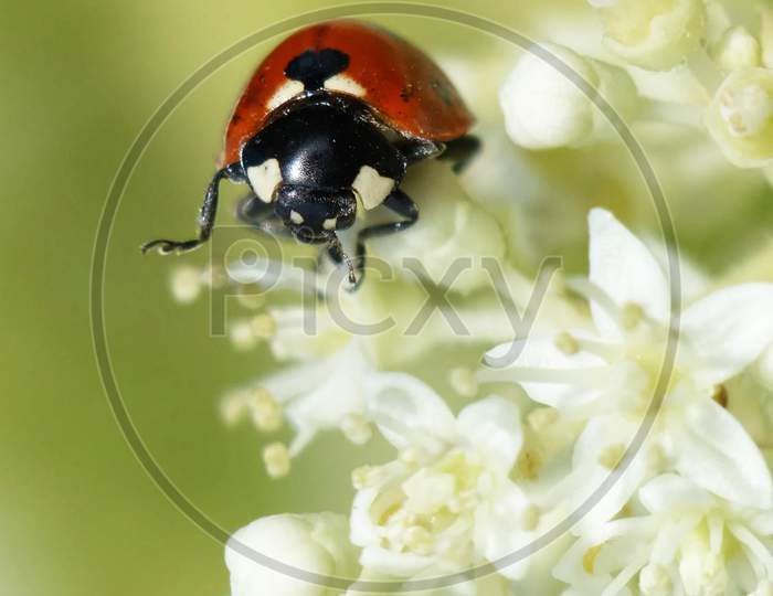 Beautiful pictures of  insects