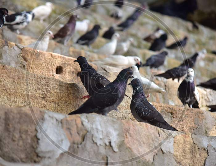 Pigeons sits inside the premises of Kamakhya Temple as it re-opens for public after a gap of nearly six months due to coronavirus lockdown with certain restrictions, in Guwahati, India on October 11, 2020