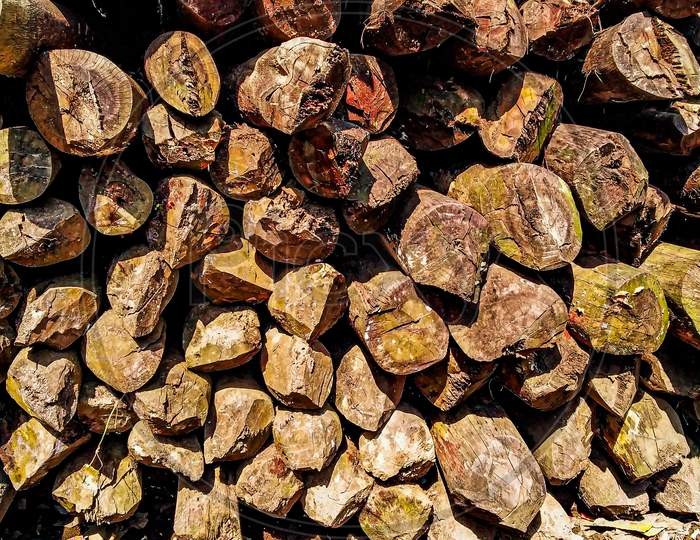 Stock Of Cut Trees