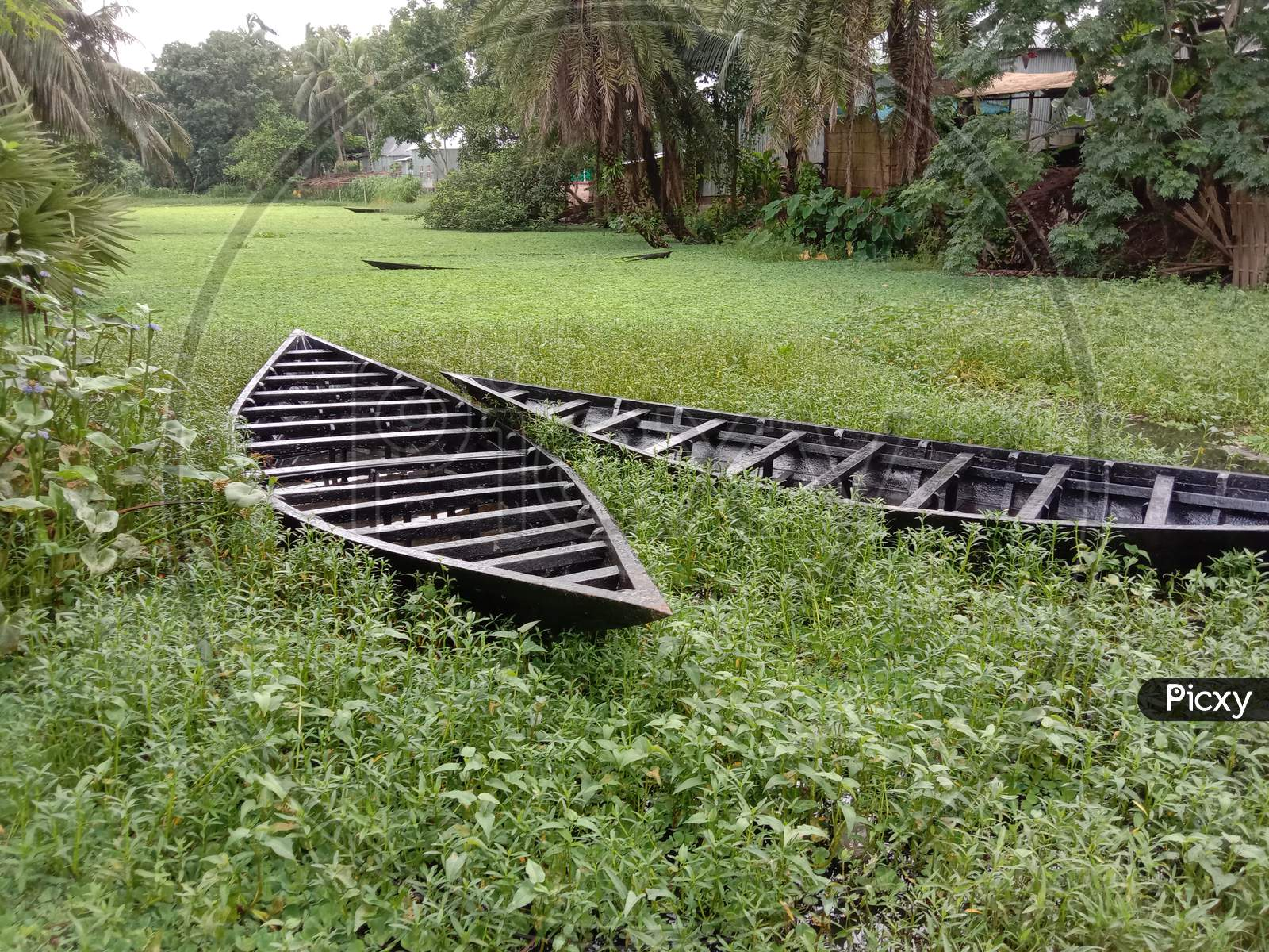 Black Color Wooden Boat With Nature