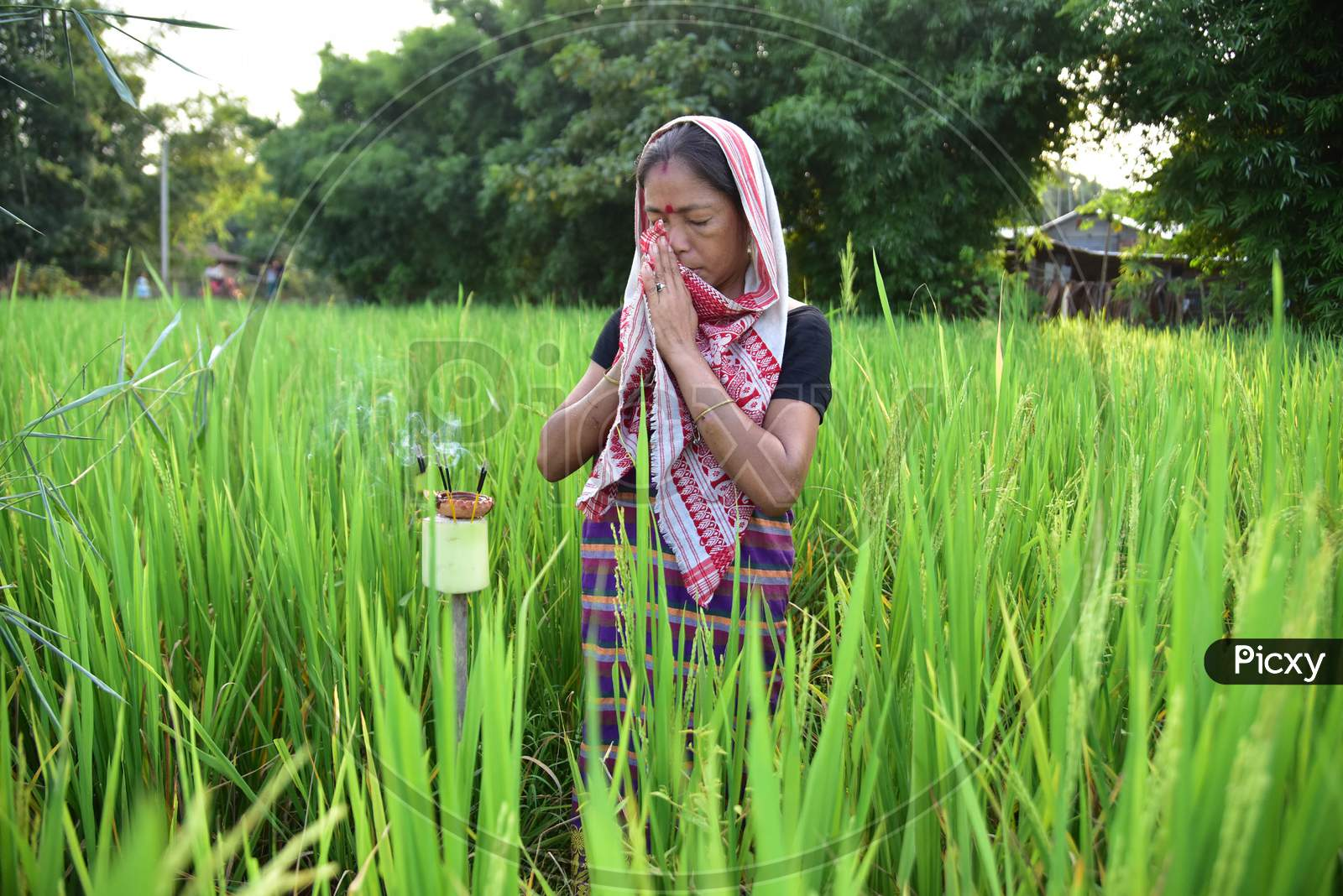 Women   offers prayers in his paddy field on the occasion of 'Kati Bihu' or 'Kangali Bihu' festival, celebrated by lightning candles and lamps to ask for the health of the crops, in Rani village on the outskirts of Guwahati on Oct 17,2020.