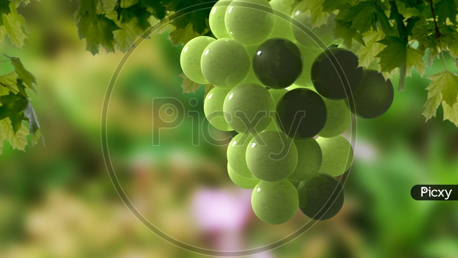 Closeup Of Fresh Colorful Grapes On The Vine With Green Leaves